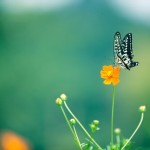 【IPMとは?】近年主流の害虫管理方法