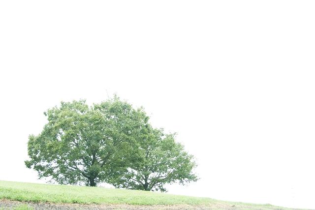 丘の上の大木